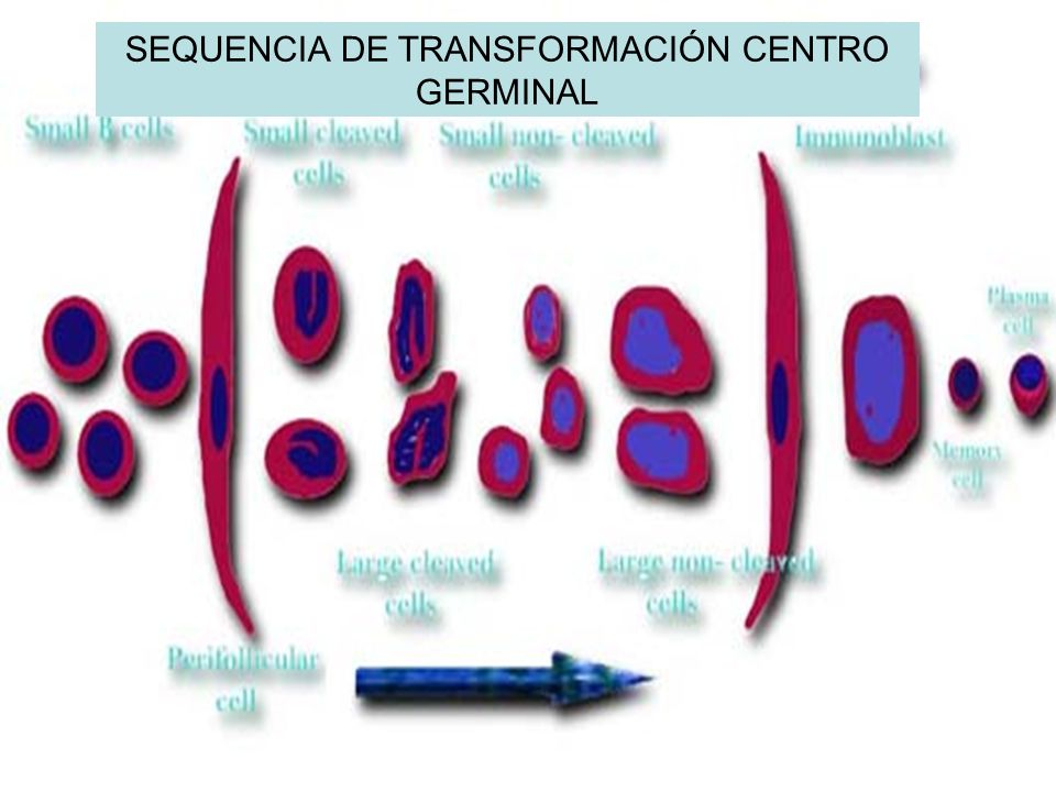 SEQUENCIA DE TRANSFORMACIÓN CENTRO