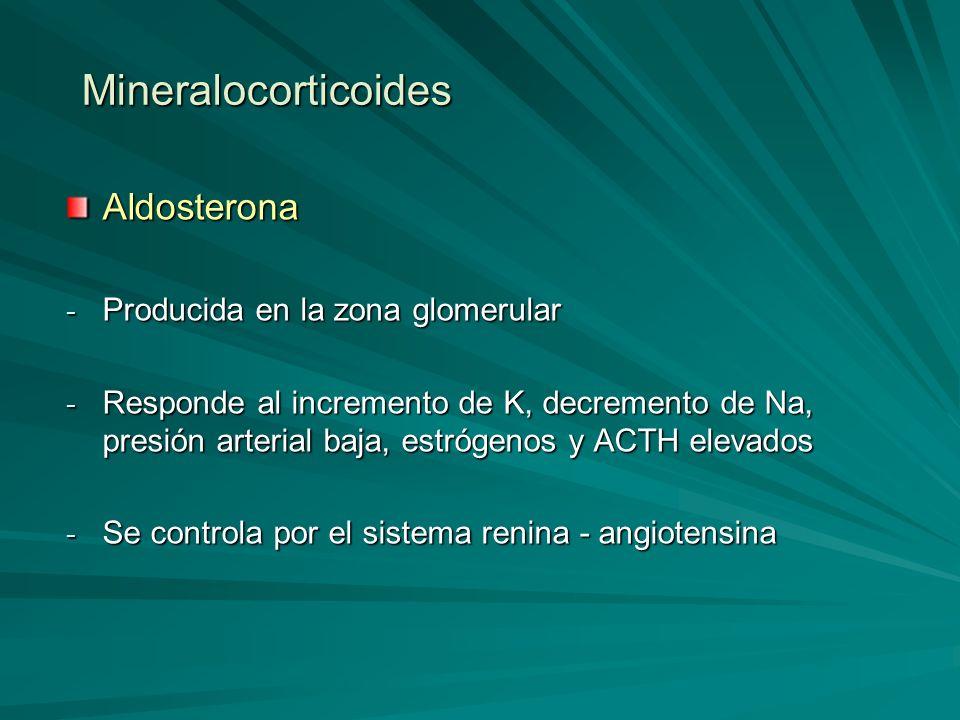 Mineralocorticoides Aldosterona Producida en la zona glomerular