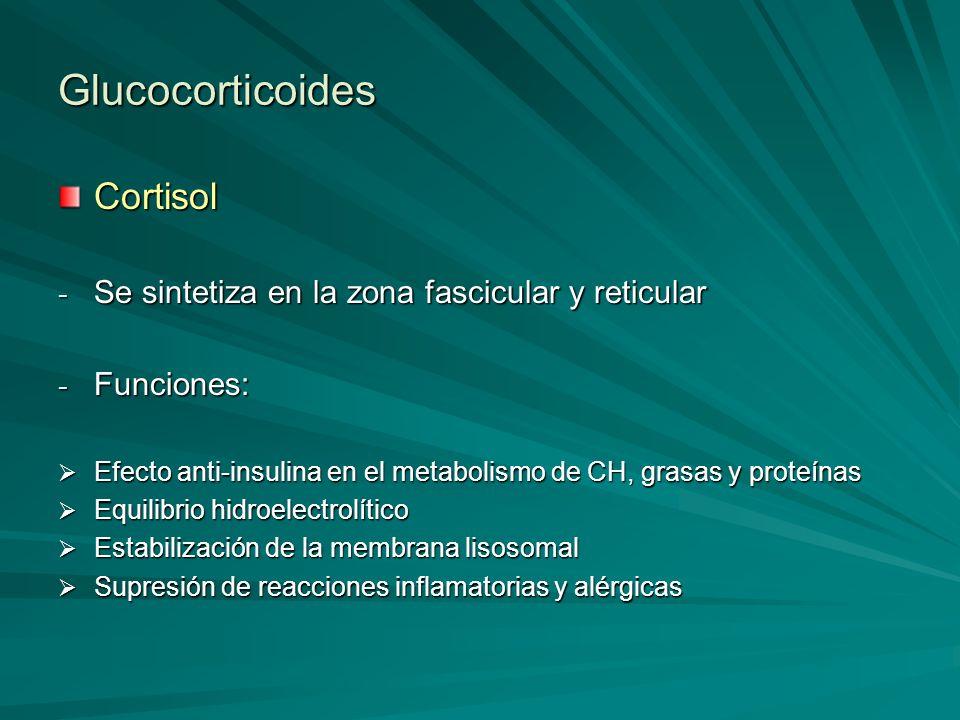 Glucocorticoides Cortisol