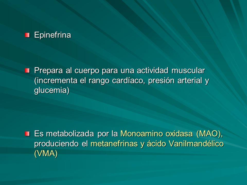 EpinefrinaPrepara al cuerpo para una actividad muscular (incrementa el rango cardíaco, presión arterial y glucemia)