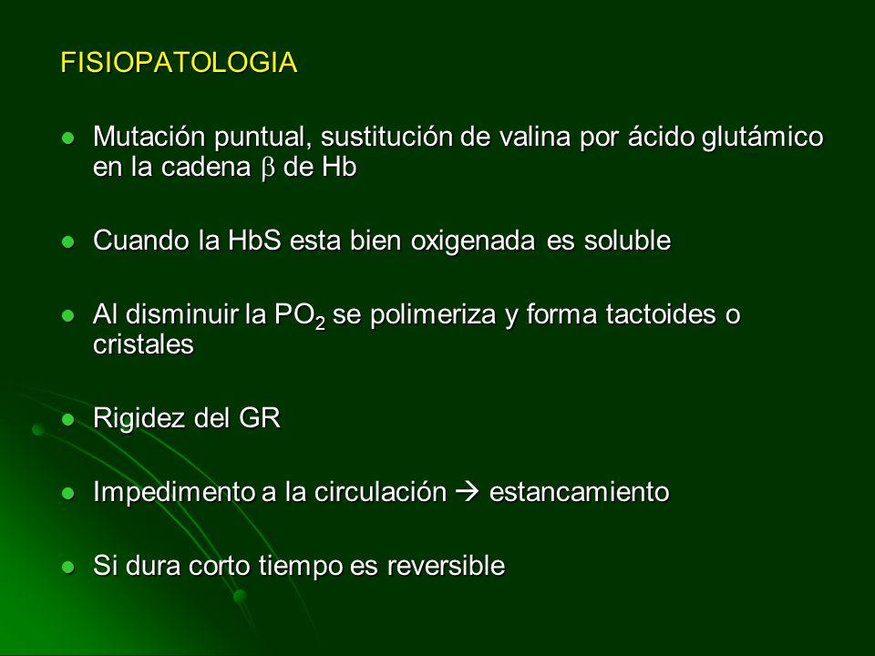 FISIOPATOLOGIA Mutación puntual, sustitución de valina por ácido glutámico en la cadena  de Hb. Cuando la HbS esta bien oxigenada es soluble.
