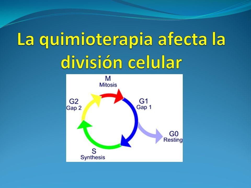 La quimioterapia afecta la división celular