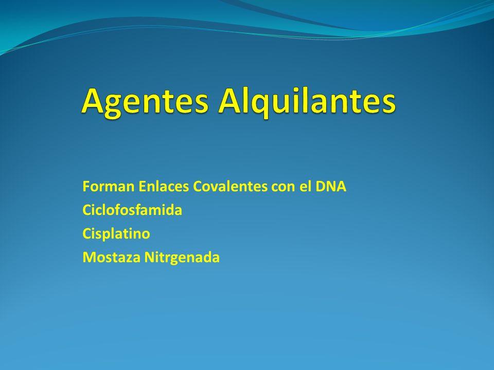 Agentes Alquilantes Forman Enlaces Covalentes con el DNA