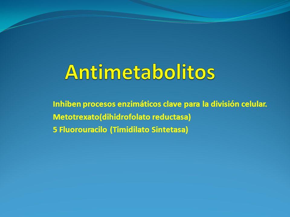 Antimetabolitos Inhiben procesos enzimáticos clave para la división celular. Metotrexato(dihidrofolato reductasa)