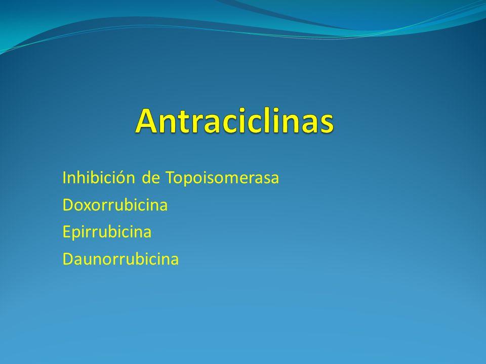 Antraciclinas Inhibición de Topoisomerasa Doxorrubicina Epirrubicina