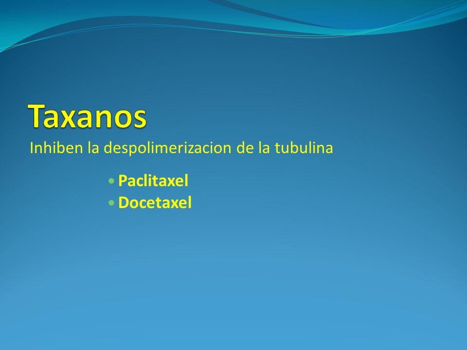Taxanos Paclitaxel Docetaxel