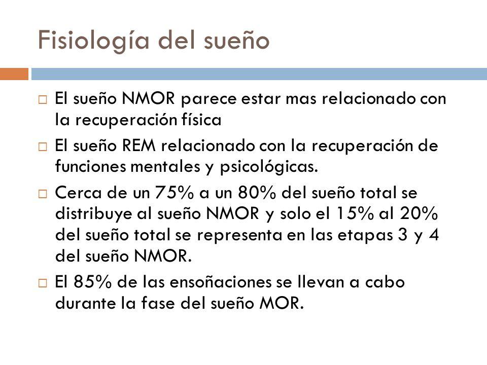 Fisiología del sueño El sueño NMOR parece estar mas relacionado con la recuperación física.