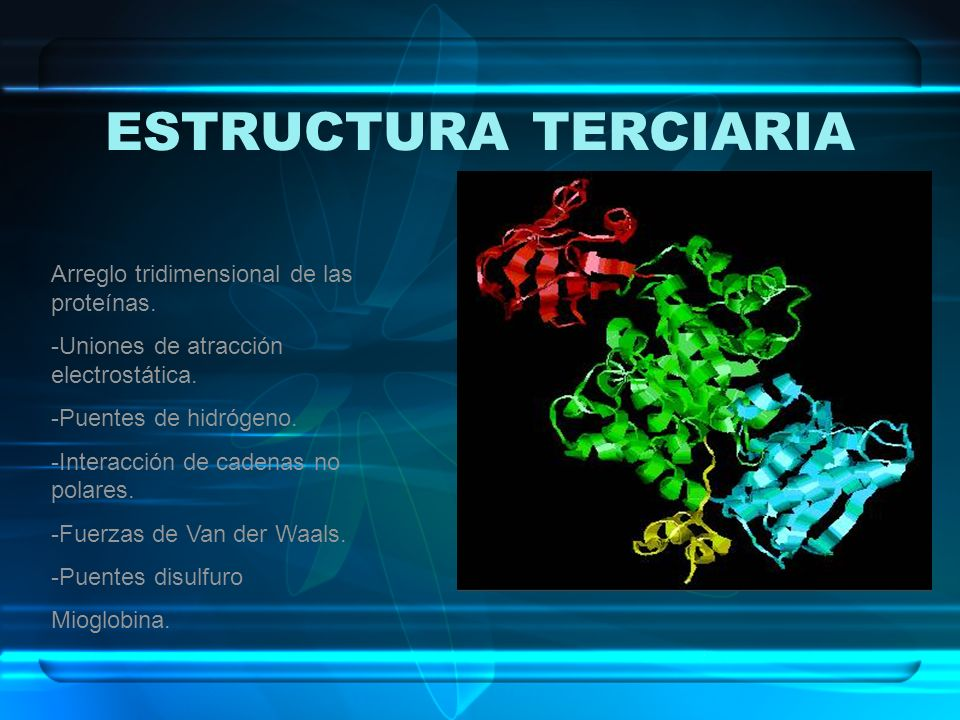 ESTRUCTURA TERCIARIA Arreglo tridimensional de las proteínas.