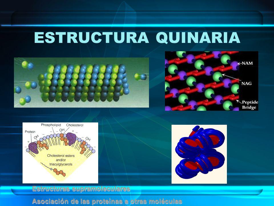ESTRUCTURA QUINARIA Estructuras supramoleculares