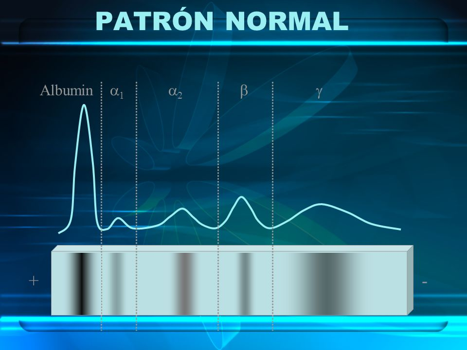 PATRÓN NORMAL Albumin 1 2   + -