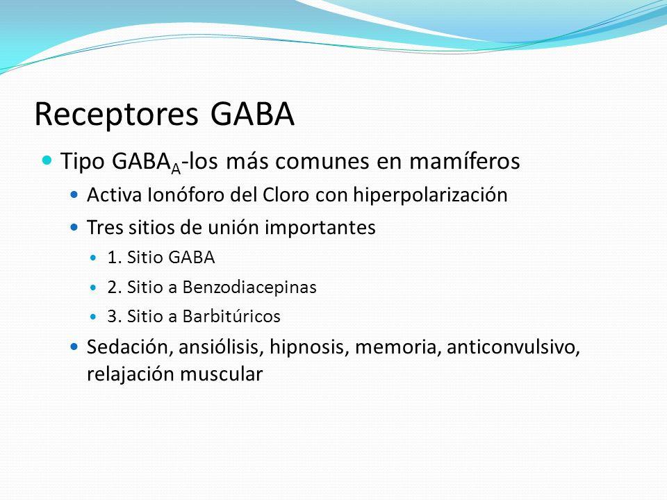 Receptores GABA Tipo GABAA-los más comunes en mamíferos
