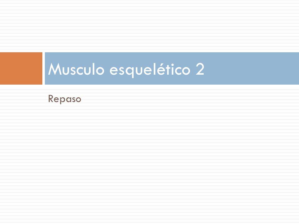 Musculo esquelético 2 Repaso
