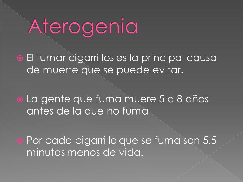 Aterogenia El fumar cigarrillos es la principal causa de muerte que se puede evitar. La gente que fuma muere 5 a 8 años antes de la que no fuma.