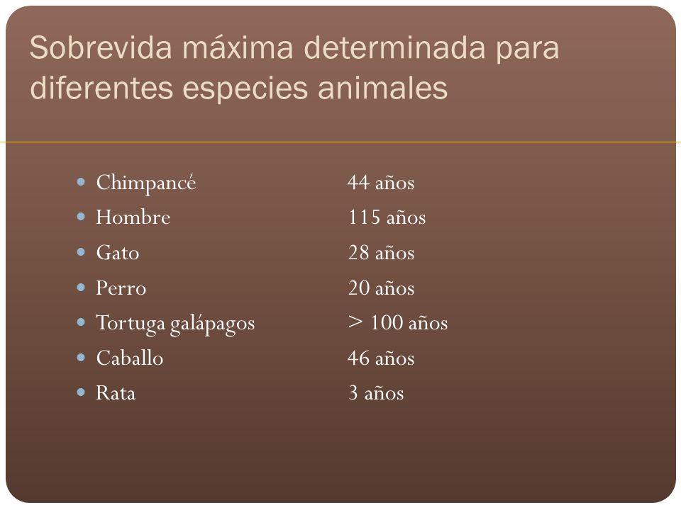 Sobrevida máxima determinada para diferentes especies animales