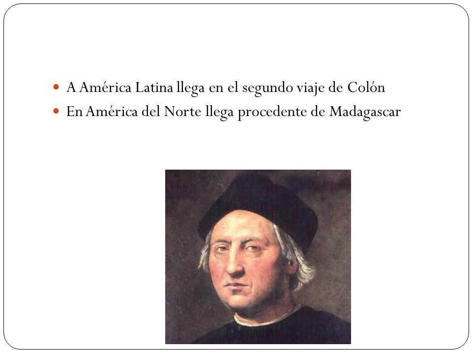 A América Latina llega en el segundo viaje de Colón