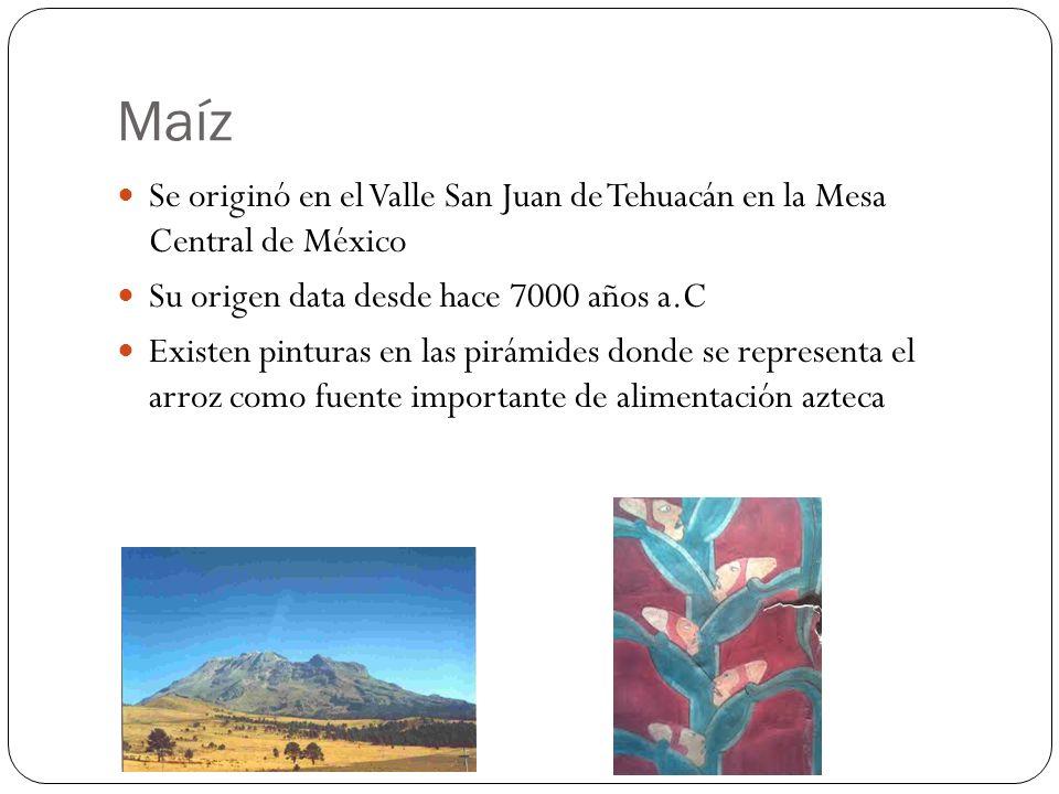 Maíz Se originó en el Valle San Juan de Tehuacán en la Mesa Central de México. Su origen data desde hace 7000 años a.C.