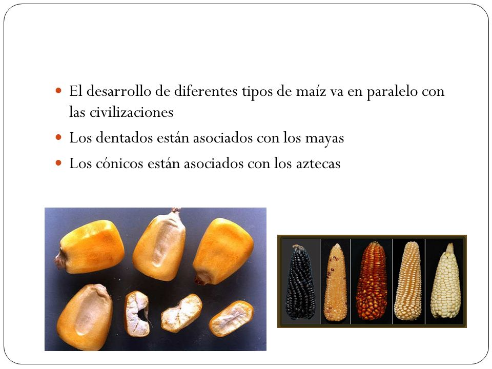 El desarrollo de diferentes tipos de maíz va en paralelo con las civilizaciones