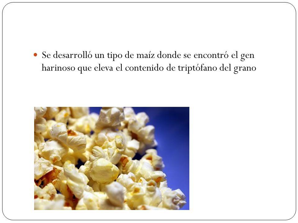 Se desarrolló un tipo de maíz donde se encontró el gen harinoso que eleva el contenido de triptófano del grano