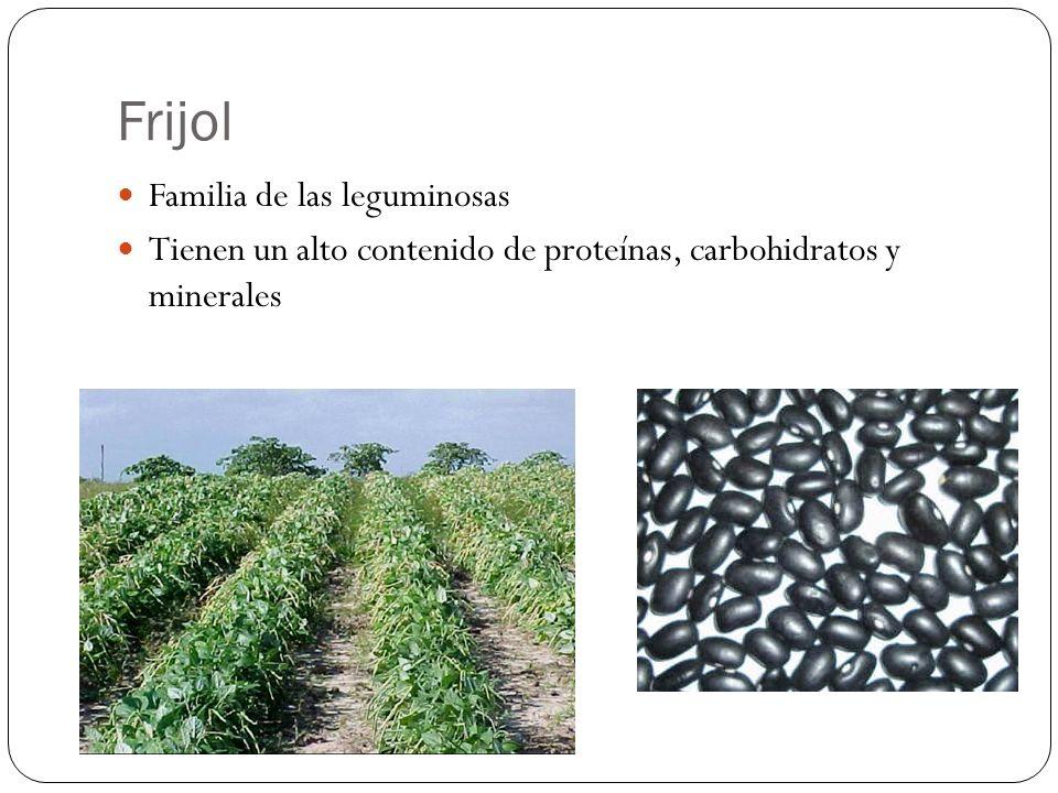 Frijol Familia de las leguminosas