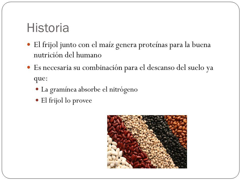 Historia El frijol junto con el maíz genera proteínas para la buena nutrición del humano.