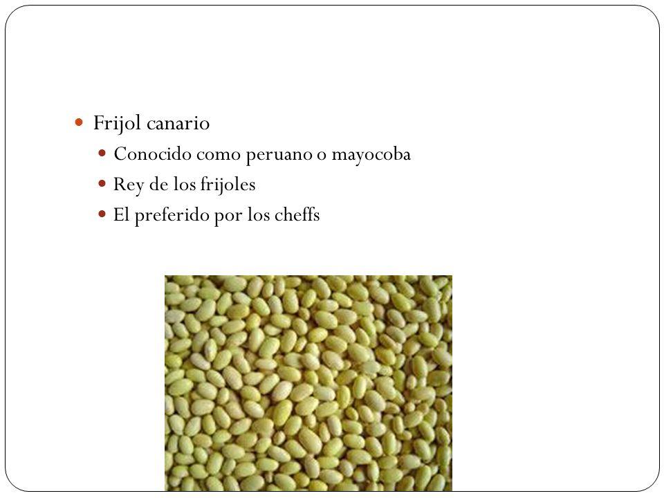 Frijol canario Conocido como peruano o mayocoba Rey de los frijoles