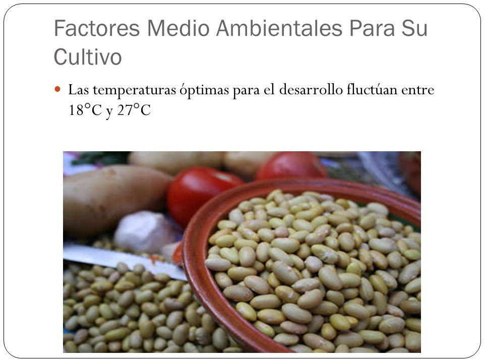 Factores Medio Ambientales Para Su Cultivo