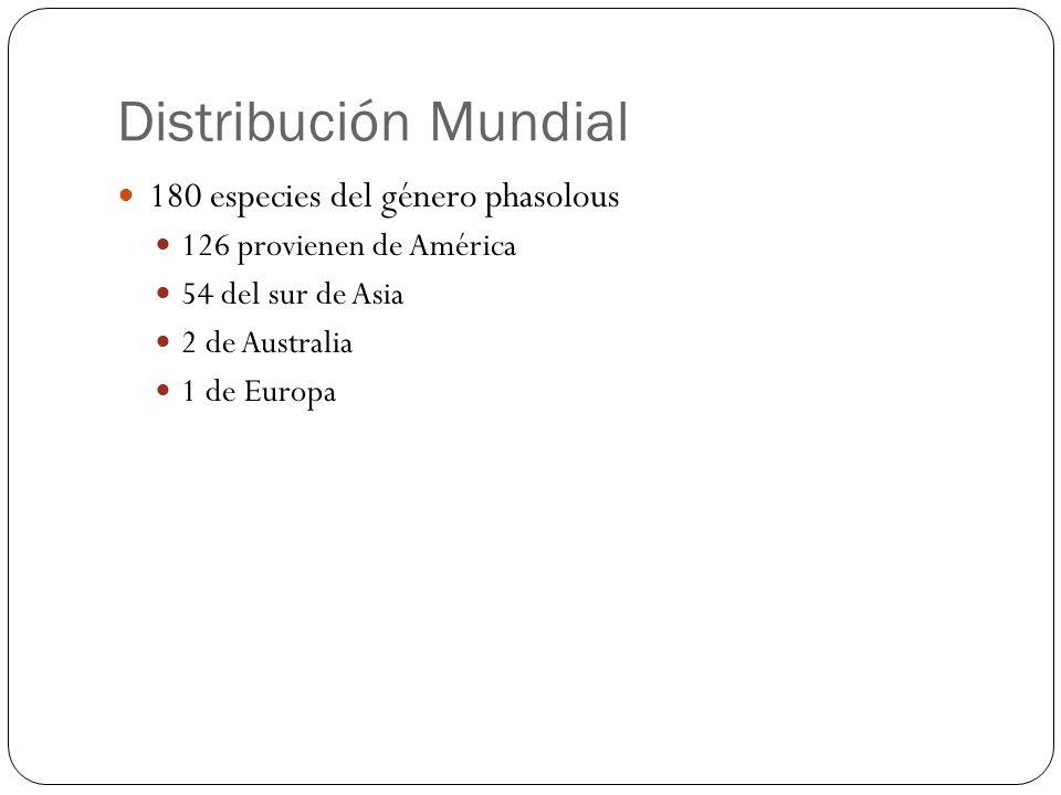 Distribución Mundial 180 especies del género phasolous