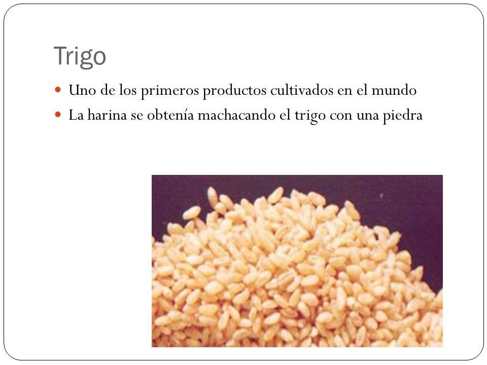 Trigo Uno de los primeros productos cultivados en el mundo