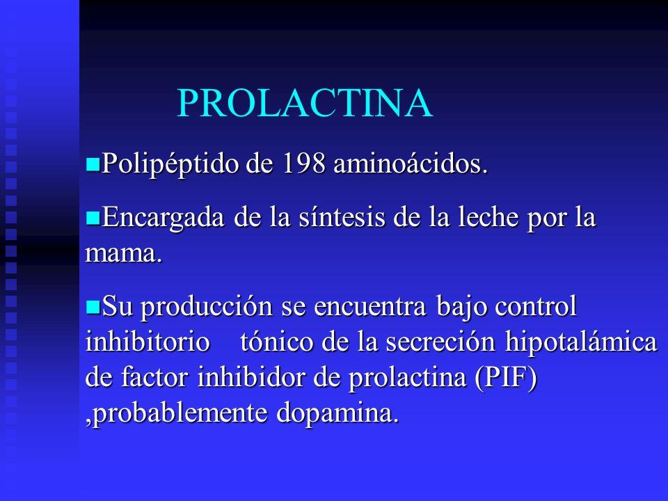 PROLACTINA Polipéptido de 198 aminoácidos.