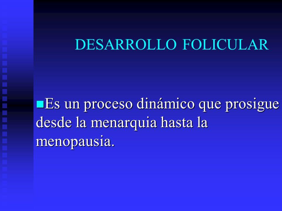 DESARROLLO FOLICULAR Es un proceso dinámico que prosigue desde la menarquia hasta la menopausia.