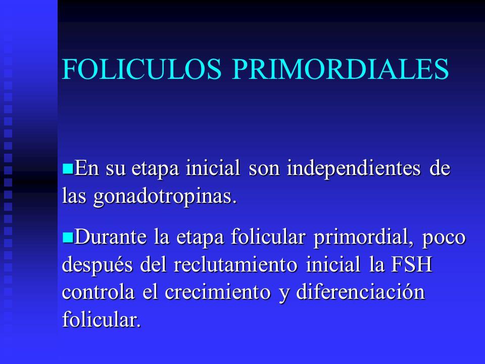 FOLICULOS PRIMORDIALES