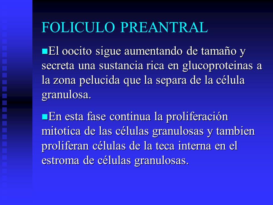 FOLICULO PREANTRAL
