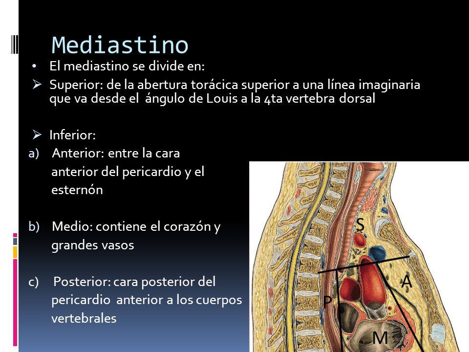 Mediastino El mediastino se divide en: