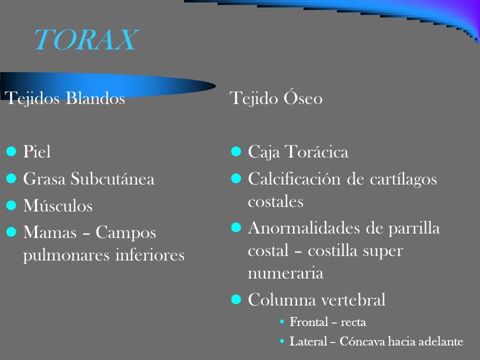 TORAX Tejidos Blandos Piel Grasa Subcutánea Músculos