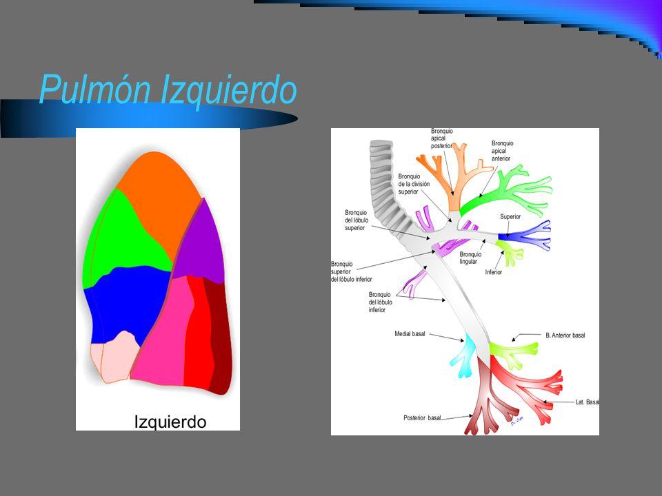 Pulmón Izquierdo