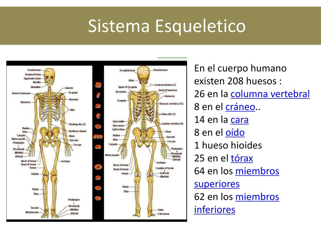 Sistemas del Cuerpo Humano - ppt descargar