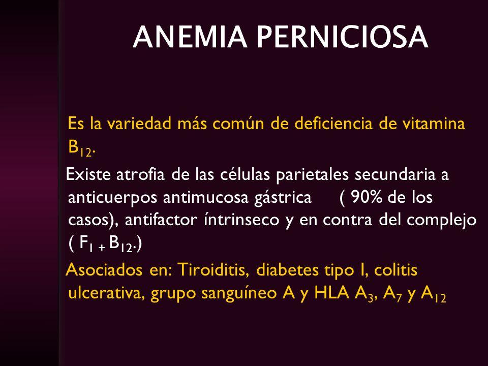 ANEMIA PERNICIOSA Es la variedad más común de deficiencia de vitamina B12.