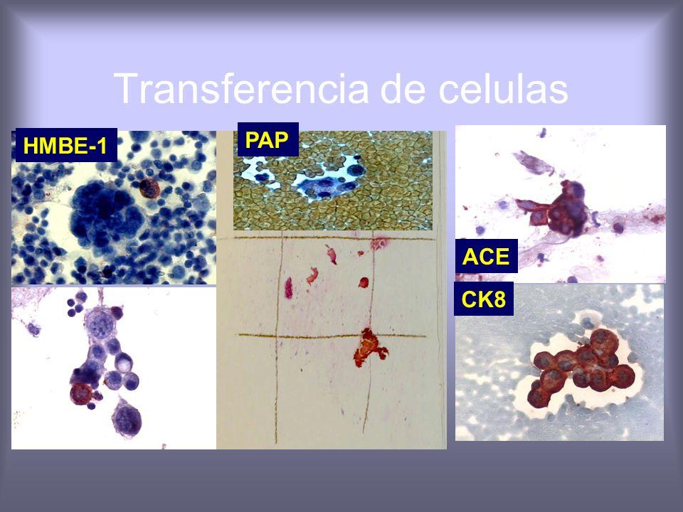 Transferencia de celulas