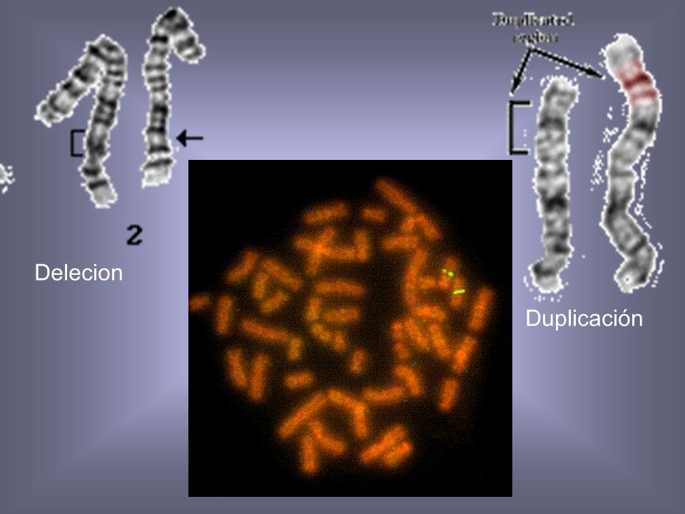 Delecion Duplicación