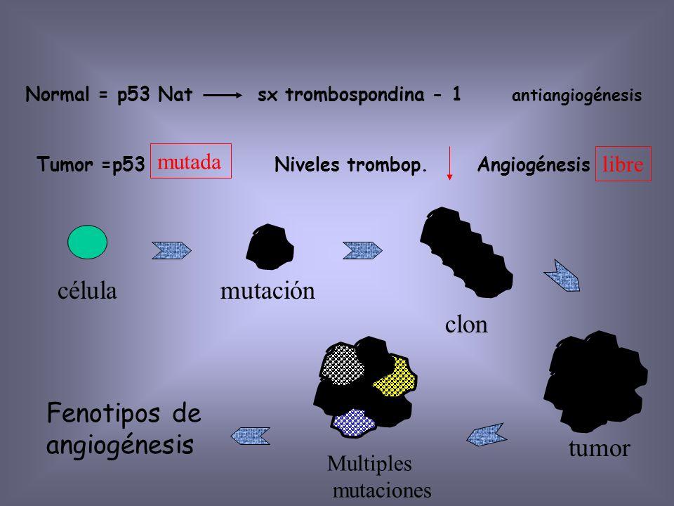 clon célula mutación tumor Fenotipos de angiogénesis mutada libre