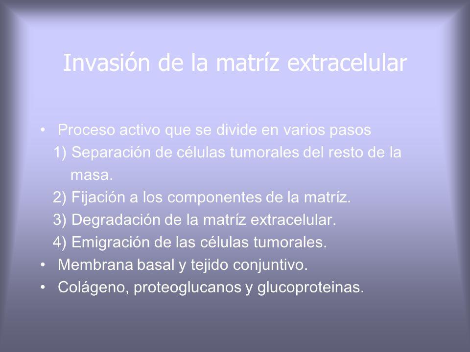 Invasión de la matríz extracelular