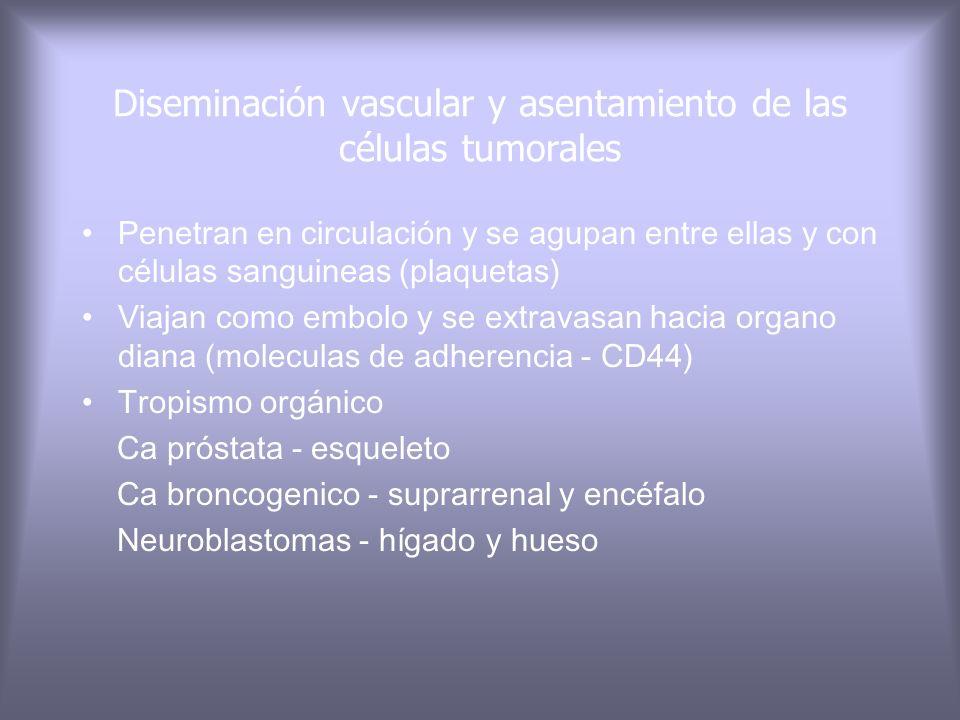 Diseminación vascular y asentamiento de las células tumorales