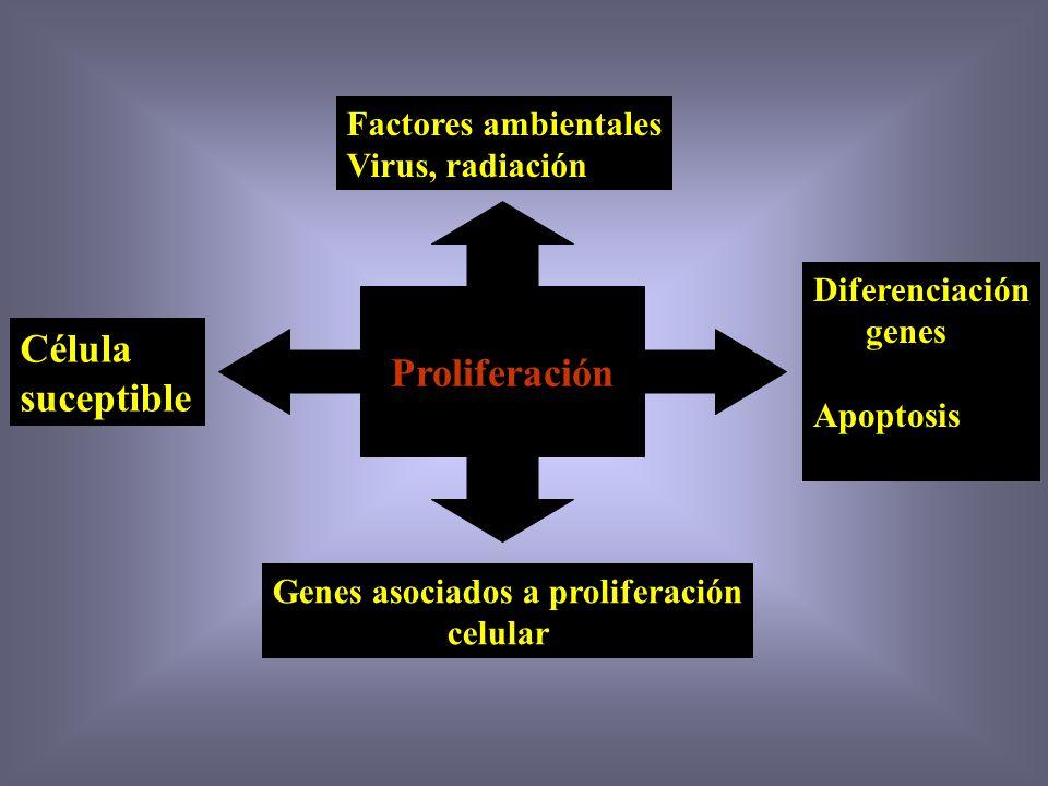 Proliferación Célula suceptible Factores ambientales Virus, radiación