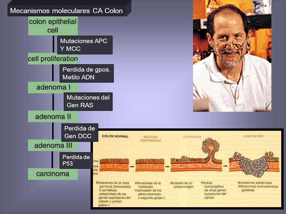 Mecanismos moleculares CA Colon