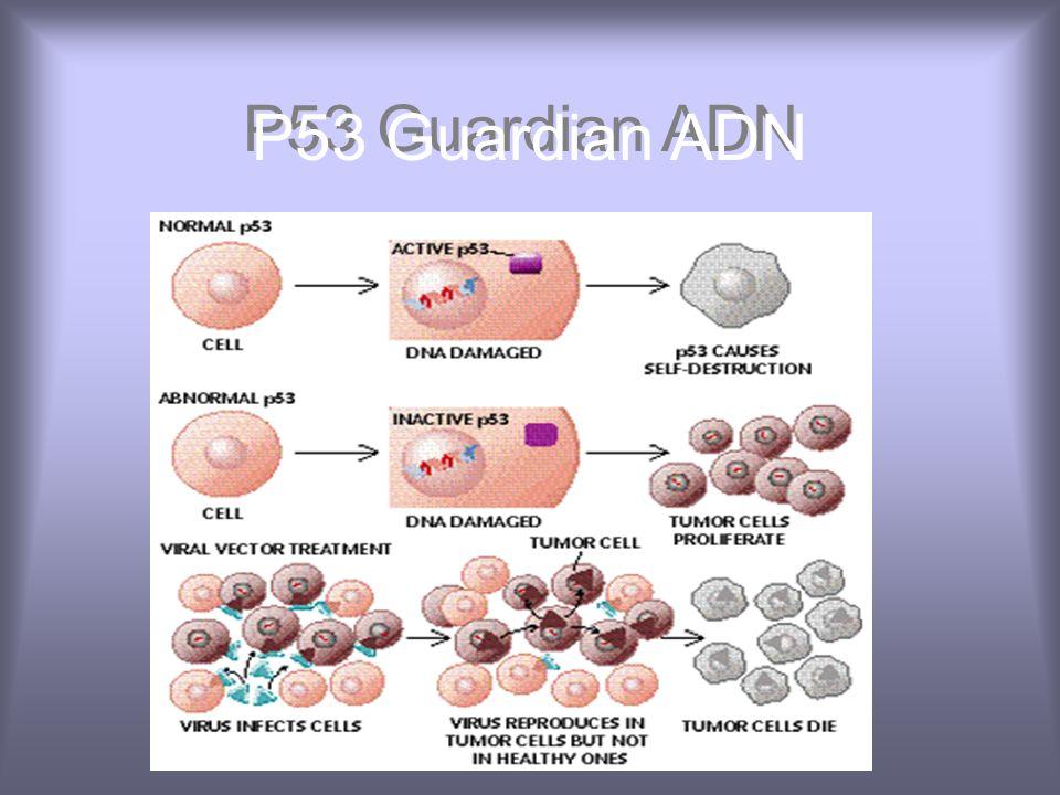 P53 Guardian ADN
