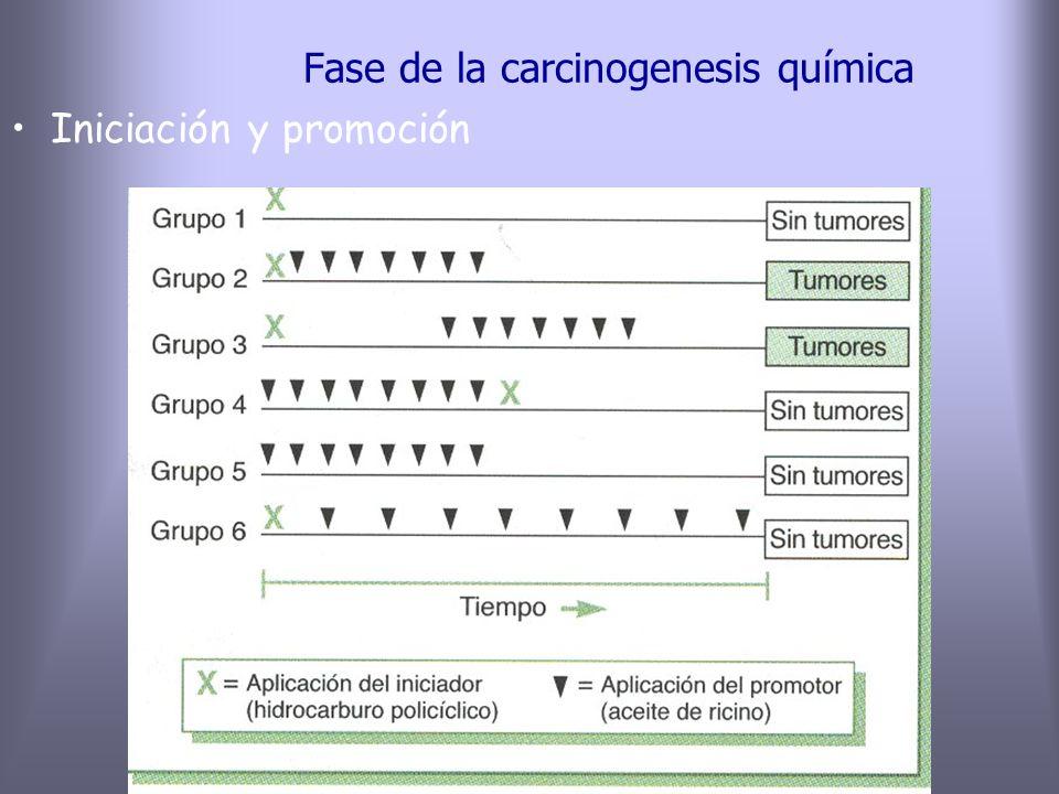 Fase de la carcinogenesis química