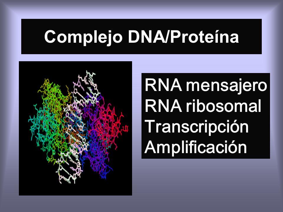 Complejo DNA/Proteína