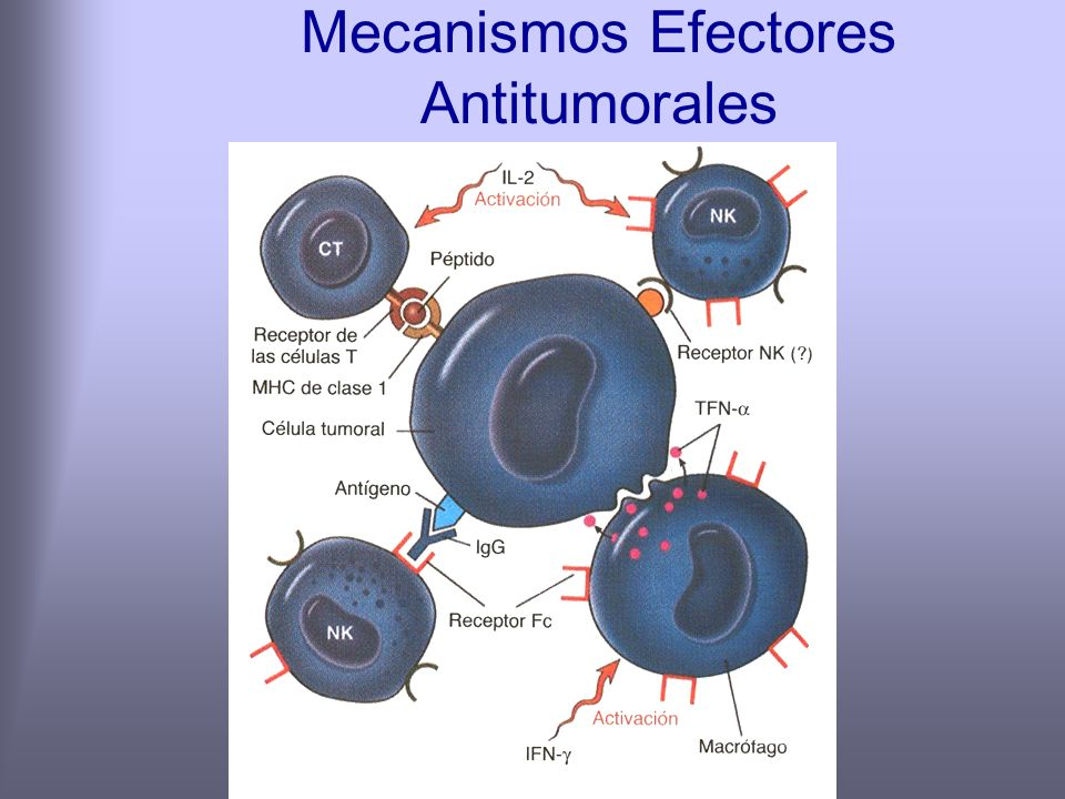 Mecanismos Efectores Antitumorales