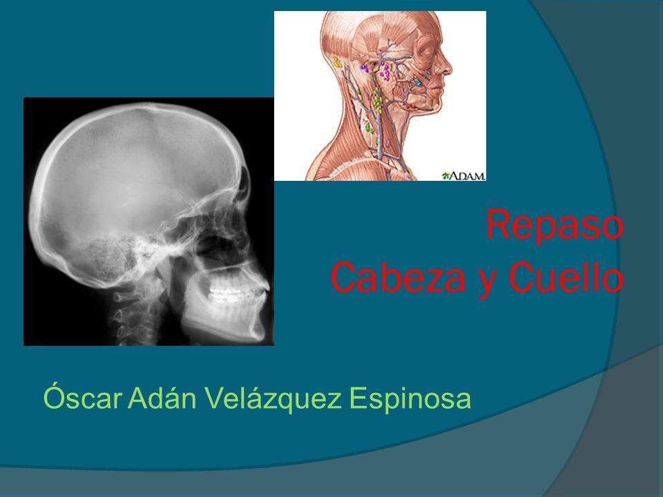 Repaso Cabeza y Cuello Óscar Adán Velázquez Espinosa