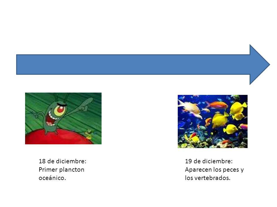 18 de diciembre: Primer plancton oceánico. 19 de diciembre: Aparecen los peces y los vertebrados.